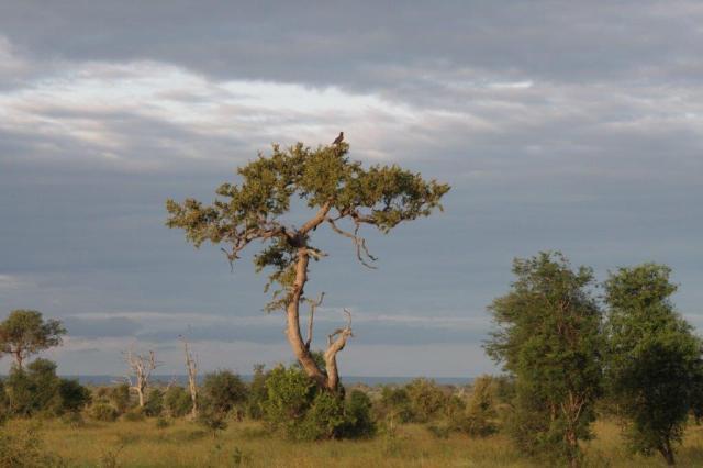 Late Afternoon near Satara