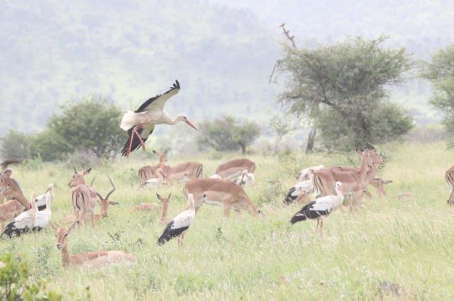 Beautiful Kruger scene