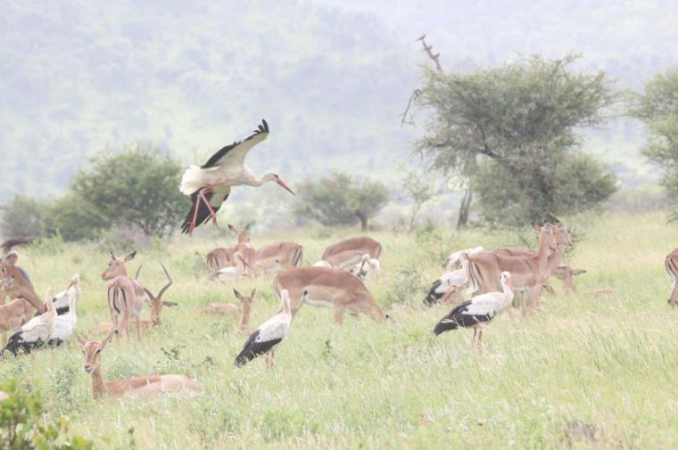 Beautiful Kruger scene